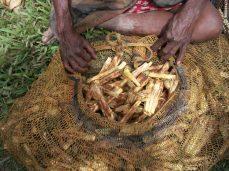 Ripe Fallen Pandanus nuts - Maiela Village, Kosipe