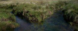 cropped-prestine-vegetation-at-the-boarder-of-kosipe-and-sopu-goilala-74.jpg