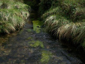 Prestine Vegetation at the Boarder of Kosipe and Sopu - Goilala (107)