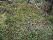 Prestine Vegetation at the Boarder of Kosipe and Sopu - Goilala (112)
