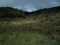 Prestine Vegetation at the Boarder of Kosipe and Sopu - Goilala (114)