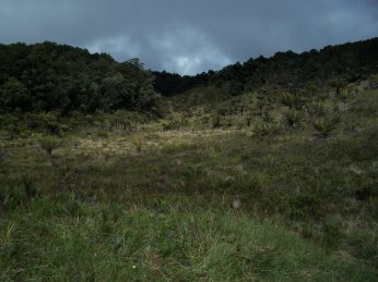 Prestine Vegetation at the Boarder of Kosipe and Sopu - Goilala (114)