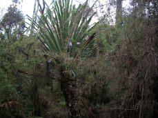 Prestine Vegetation at the Boarder of Kosipe and Sopu - Goilala (120)