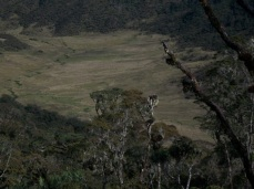 Prestine Vegetation at the Boarder of Kosipe and Sopu - Goilala (123)