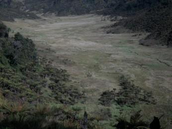 Prestine Vegetation at the Boarder of Kosipe and Sopu - Goilala (58)
