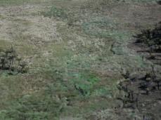 Prestine Vegetation at the Boarder of Kosipe and Sopu - Goilala (62)