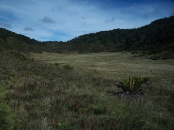 Prestine Vegetation at the Boarder of Kosipe and Sopu - Goilala (67)