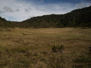 Prestine Vegetation at the Boarder of Kosipe and Sopu - Goilala (69)