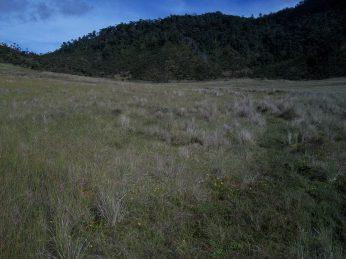 Prestine Vegetation at the Boarder of Kosipe and Sopu - Goilala (77)