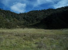 Prestine Vegetation at the Boarder of Kosipe and Sopu - Goilala (79)