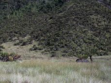 Prestine Vegetation at the Boarder of Kosipe and Sopu - Goilala (80)