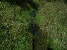 Prestine Vegetation at the Boarder of Kosipe and Sopu - Goilala (82)