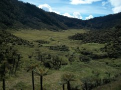 Prestine Vegetation at the Boarder of Kosipe and Sopu - Goilala (86)