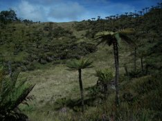 Prestine Vegetation at the Boarder of Kosipe and Sopu - Goilala (87)