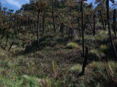 Prestine Vegetation at the Boarder of Kosipe and Sopu - Goilala (88)