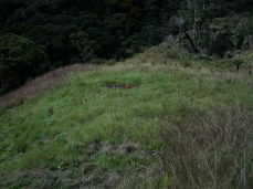 Prestine Vegetation at the Boarder of Kosipe and Sopu - Goilala (92)