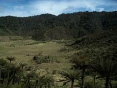 Prestine Vegetation at the Boarder of Kosipe and Sopu - Goilala (94)