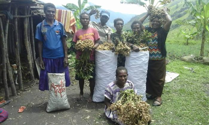 wia-tapini-women-harvest-peanuts-5