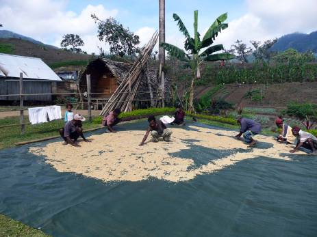Drying out Coffee Beans - Fane