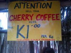 We Buy Cherry Coffee Here - Bruce Mamando