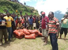 These potatoe seeds were bought from Wabag, driven through Hagen, and Simbu. Spent a couple of days at Goroka, driven to Lae, after a couple of days, they flew into Goilala on a Manolos chopper.