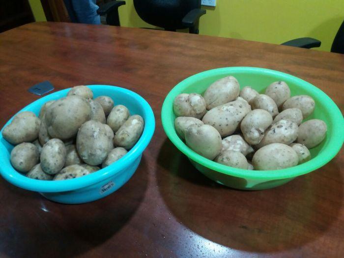 First Harvest - Kambisea
