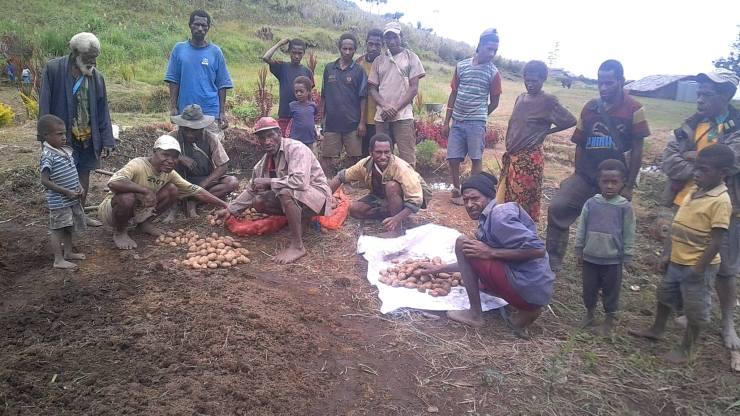 Potato Farming Enters Sopu - Joel Neva (1)