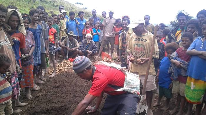 Potato Farming Enters Sopu - Joel Neva (3)