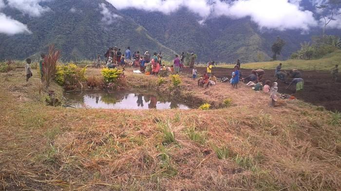 Potato Farming Enters Sopu - Joel Neva (4)